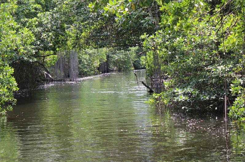 898x530-jamaica-river